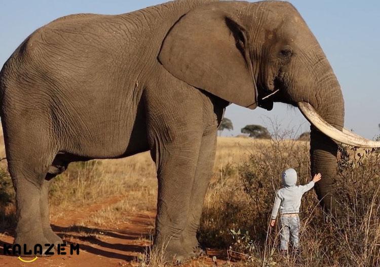 فیل قدرتمندترین حیوان جهان