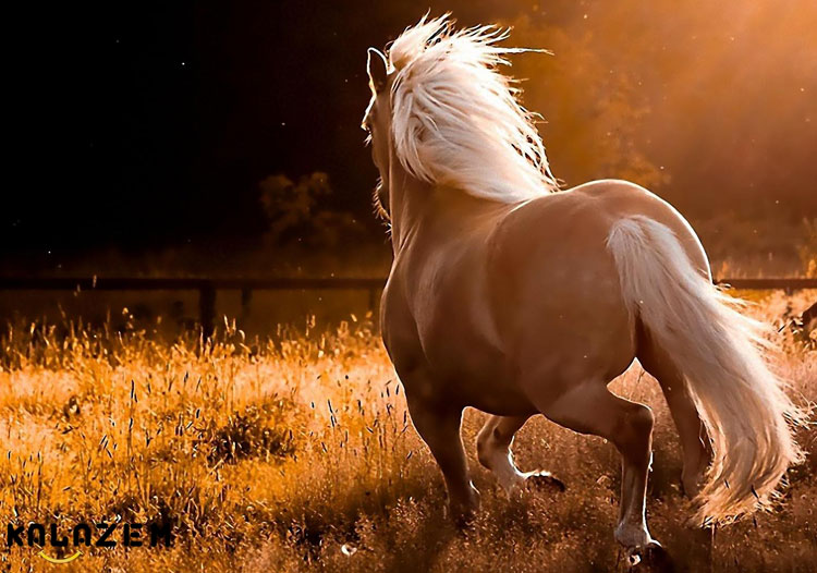 نژاد اسب ترکمن