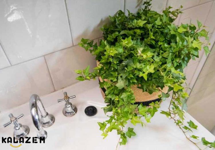 گل و گیاه مناسب سرویس بهداشتی